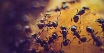 pest control sanitation assessments